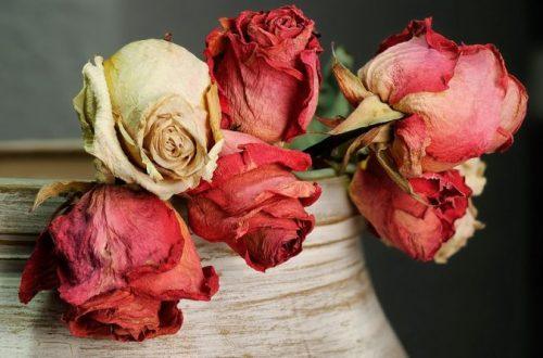 Chyby podľa feng-šuej alebo prečo nemať sušené kvety v dome