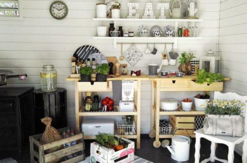 Aké rastliny voliť do kuchyne?