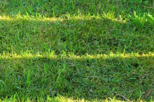 Staráme o trávnik. Nech je zase čoskoro krásny