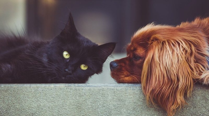 Máte doma mačku a chcete aj psa? Niektoré plemená sa s mačkou znáša