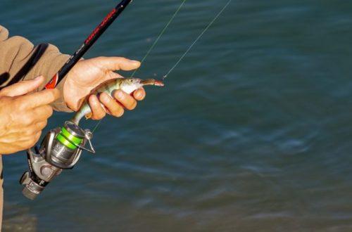 Rybárstvo je taky šport! Aké ryby u nás chytajú rybári najmenej a naopak najviac?