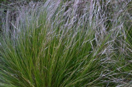 Sucho záhrade neprospieva, niektoré rastliny ho ale ocenia