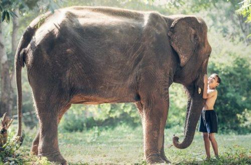Záchranné stanice slonov ako jedno veľké tému. Pozrime sa na ne z oboch strán
